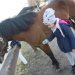 Uczennica podczas czyszczenia konia.