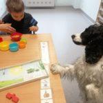 Chłopczyk w asyście psa terapeuty podczas zadać terapeutycznych związanych z segregowaniem.