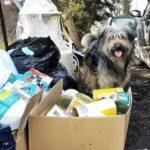Pies oraz katon zebranych darów psiej i koeciej karmy.
