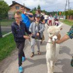 Uczestnicy półkonlonii na spacerze z alpaką.