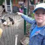 Uczeń obserwujący kury.